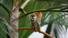 biodiversity costa rica