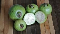 cas fruit costa rica main