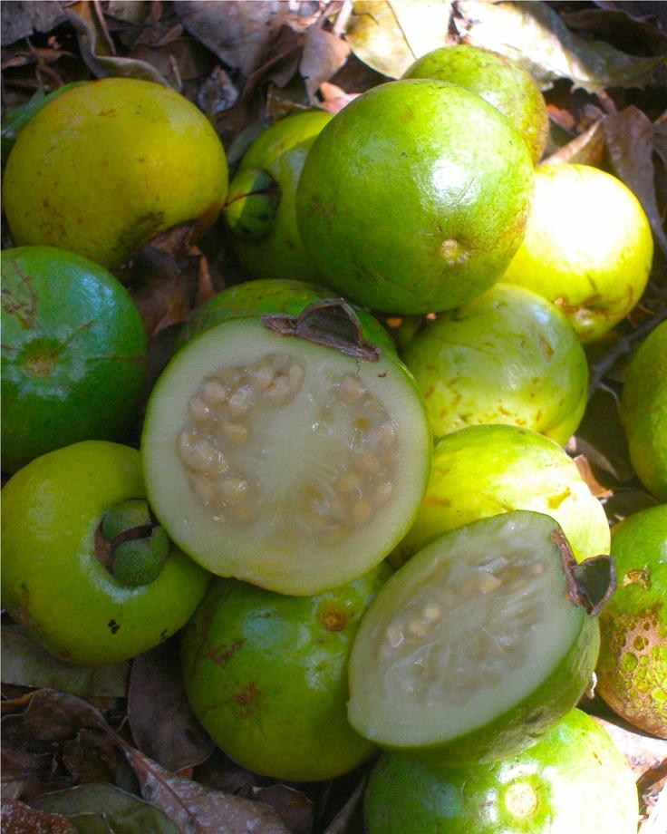 cas fruit costa rica