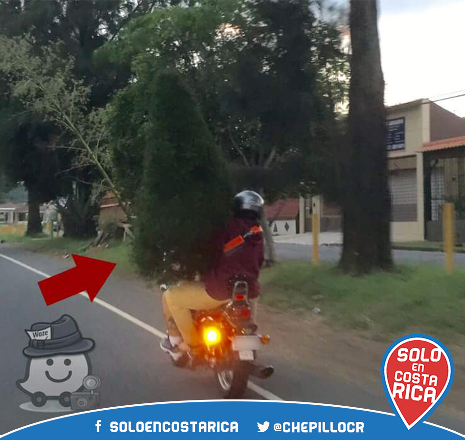 christmas tree delivery in costa rica
