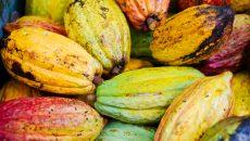 colorado-couple-cacao-costa-rica-main