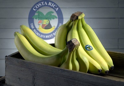 costa rica bananas extinct