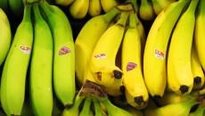 costa rica bananas main