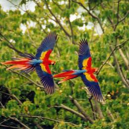 costa-rica-biodiversity