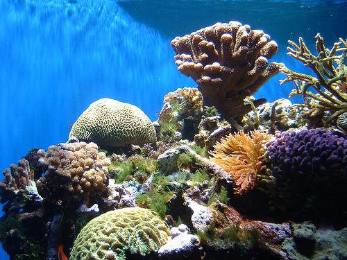 costa rica coral reef scuba diving