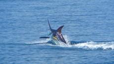 costa rica fishing bachelor party main