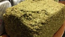 costa rica marijuana
