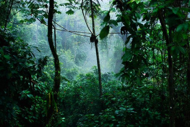 Mist rises in the rainforest near the Rio Tabacon, a thermal river which winds along the base Costa Rica's Volcan Arenal. Near La Fortuna, Costa Rica
