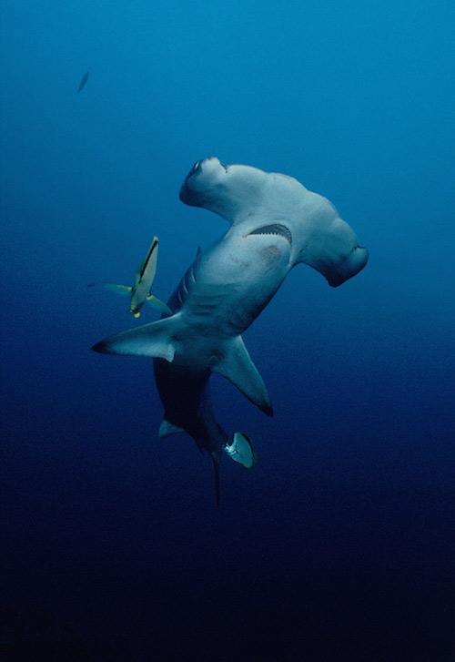 costa-rica-shark-protection-1