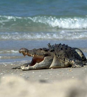 costa-rica-surfer-crocodile-attack-1