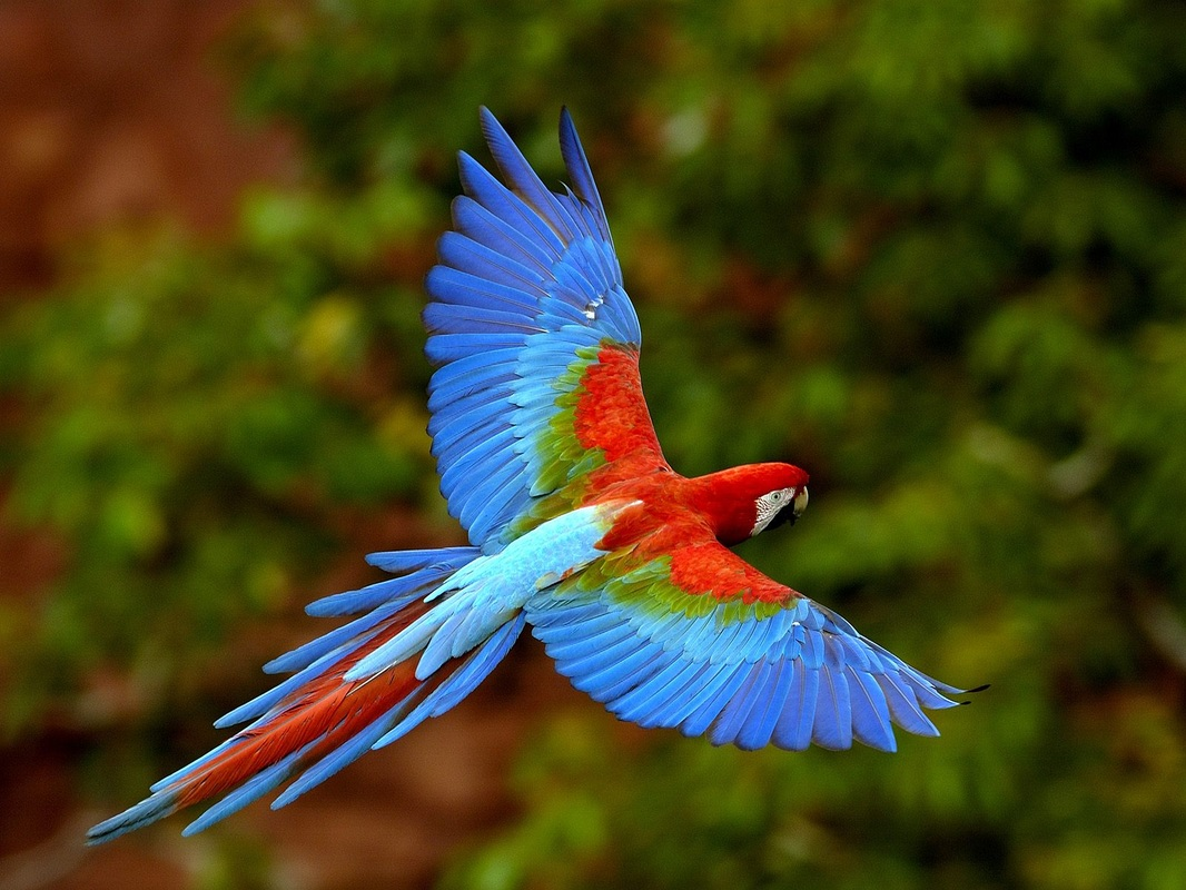 costa-rica-travel-and-tourism