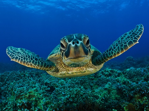 costa rica turtles 1