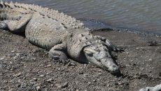 costa_rica_crocodile bridge