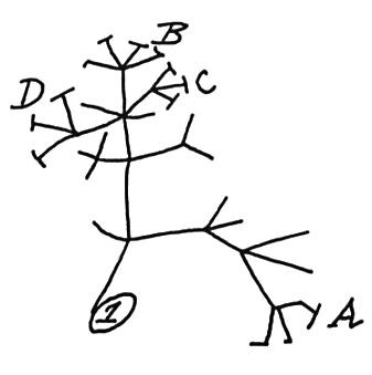darwin transmutation 1