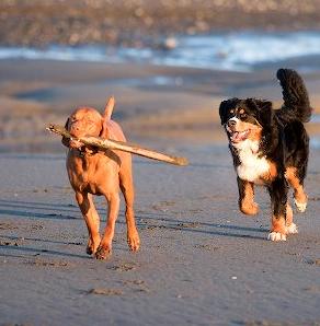 dogs on beach costa rica