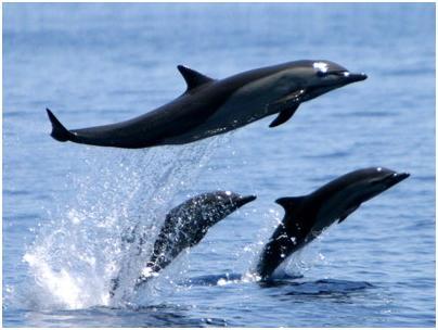 dolphin tour costa rica