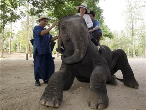 elephant-therapy-autism 1