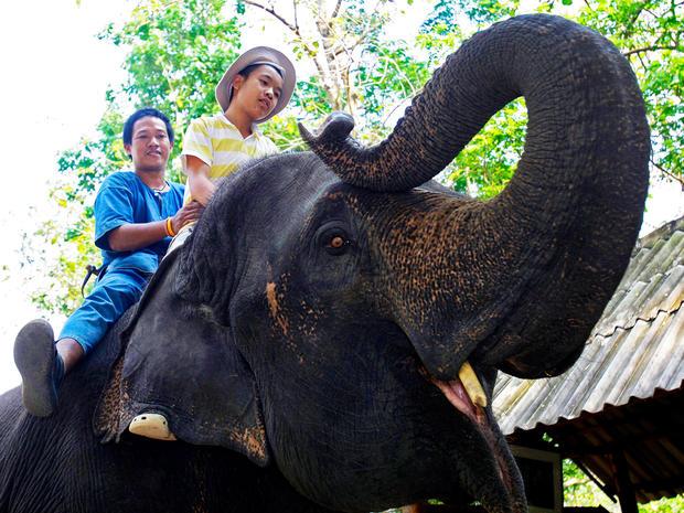 elephant-therapy-autism