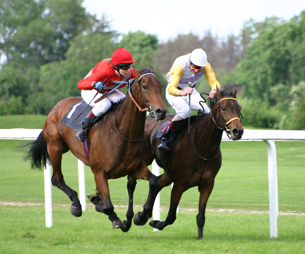 horse-racing-betting-gambling-1