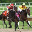 horse-racing-betting-gambling