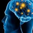 human brain main