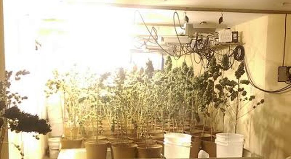 hydroponic marijuana costa rica
