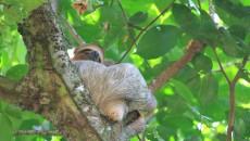 manuel antonio sloth costa rica