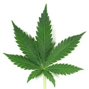 marijuana costa rica 1