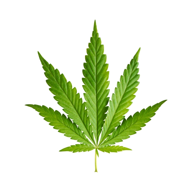 marijuana costa rica lawyer 2