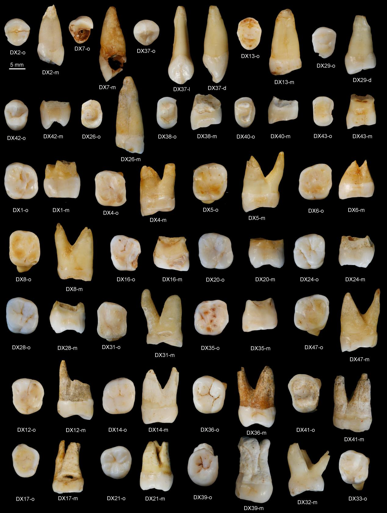 mystical properties of teeth