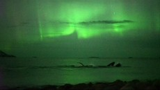 northern lights whales norway