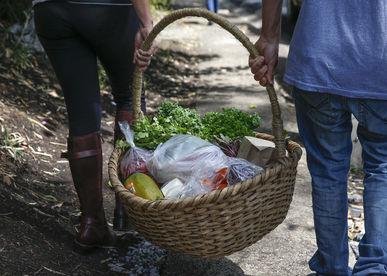 organic fair farmers market costa rica 1