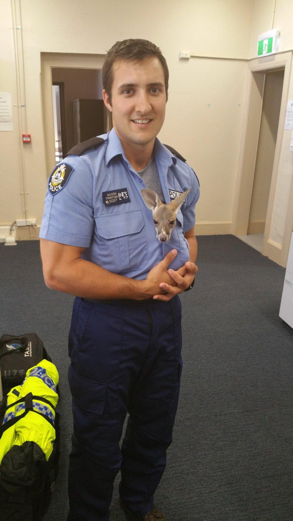 orphened baby kangaroo austrailia police1
