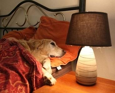 pet friendly hotel costa rica