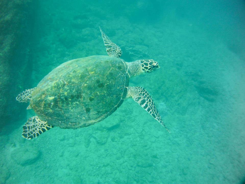 protecting costa rica environment 1