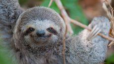 sloth institute costa rica