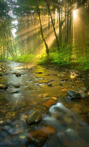 stream-in-sunlight