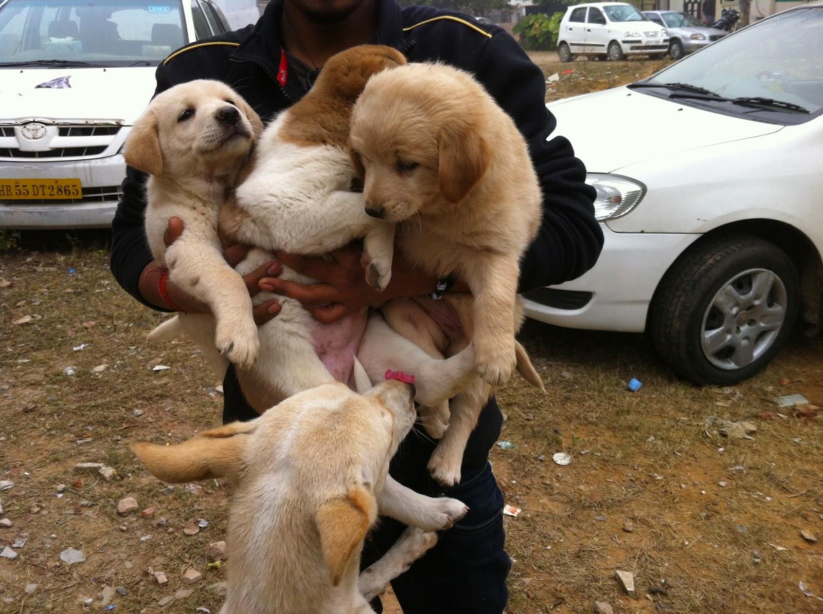 street-dogs-costa-rica-1