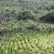 teak-farm-costa-rica