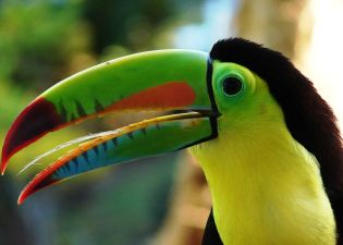 toucan in bed costa rica