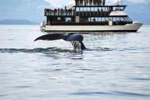whale watching costa rica 2