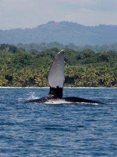 whale-watching-costa-rica-tours-1
