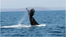 whale-watching-costa-rica-tours