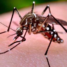 zika virus costa rica 1