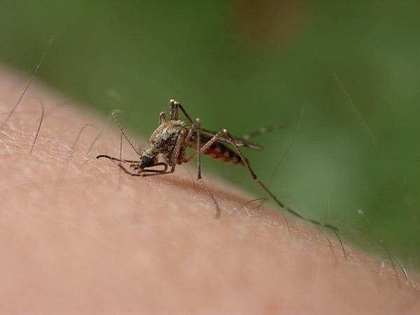 zika virus costa rica main